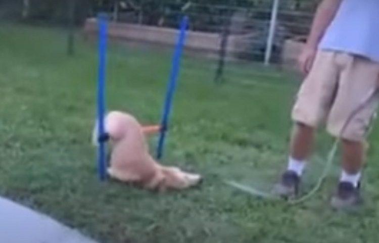 Pokušao da dresira psa i postao hit (VIDEO)